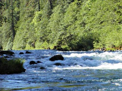 Clackams River Sunny